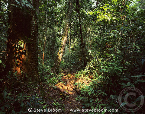Rainforest, Tanjung Putting National Park, Borneo