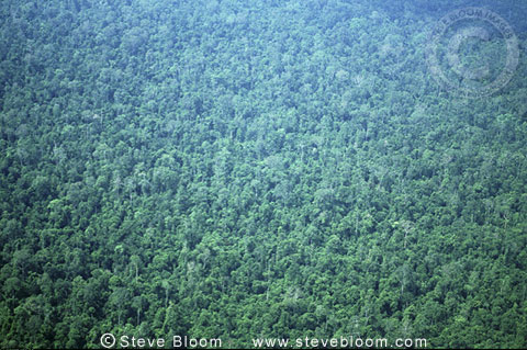 Rainforest from the air, Borneo