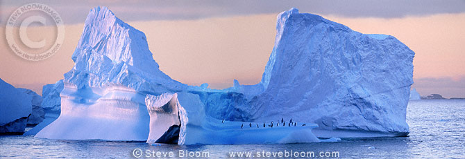 Iceberg with chinstrap penguins, Antarctica