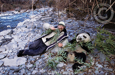Steve Bloom with giant panda, China
