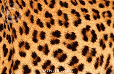 African Animal ...