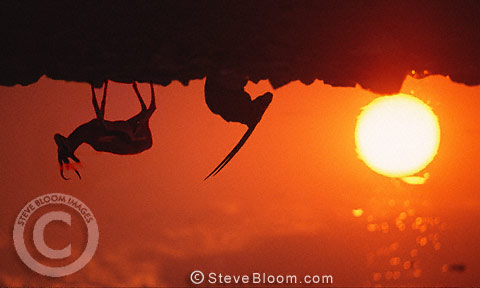 Springbok and Gemsbok reflections in a pool at sunset, Etosha National Park, Namibia