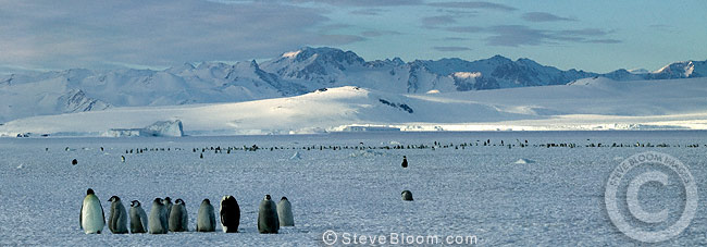 Emperor penguin colony, Cape Washington, Antarctica