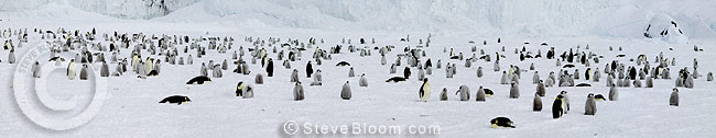 Emperor penguin colony, Coulman Island, Antarctica
