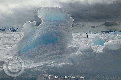 Emperor penguin with natural ice formation, Coulman Island, Antarctica
