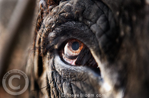 Close-up of eye of an elephant, Jaipur, India