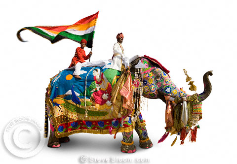 Elephant, mahout and flag-bearer all dressed for the Jaipur festival, India (on a white background)
