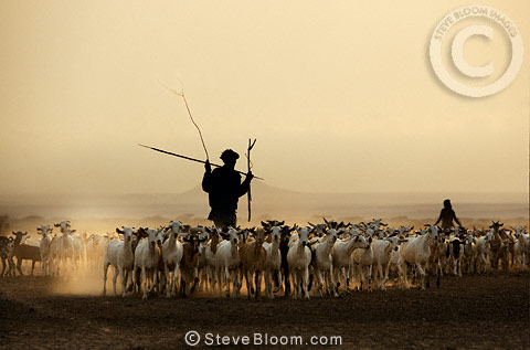 Gabbra tribespeople herding goats at sunset, Chalbi desert, Northern Kenya, Africa