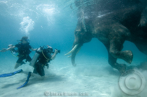 Steve Bloom photographing an Indian elephant swimming underwater, India