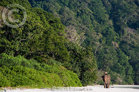 Elephant and mahout on beach in India