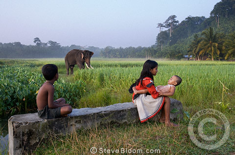 Children and elephant, Andmans, India