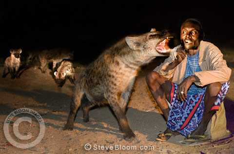 Man feeding wild hyenas with food from a stick held in his mouth, Harar, Ethiopia