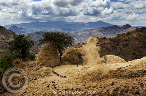 Winnowing grain, near Lalibela, Ethiopia