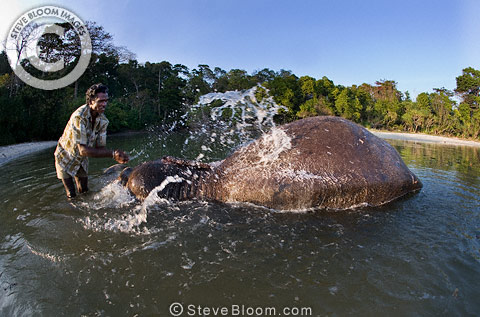 Mahout washing Indian elephant, Andaman Islands
