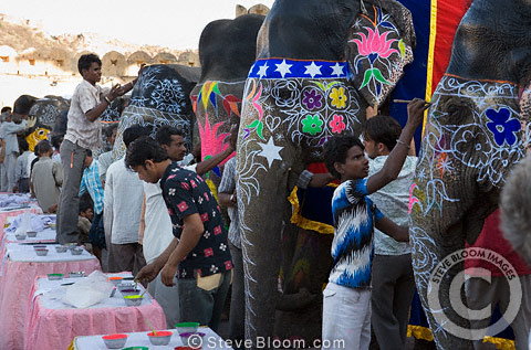 Elephants being decorated for festival, Jaipur, India