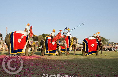 Playing polo on elephants, Jaipur, India