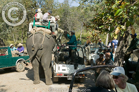 Tourists gather for tiger trail, Bandhavgarh National Park, India