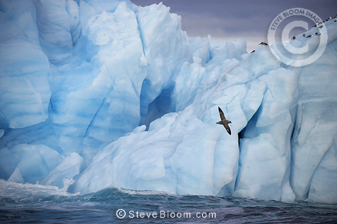 Iceberg with birds Nordaustlandet, from the world's 3rd largest glacier, Svalbard, Norway