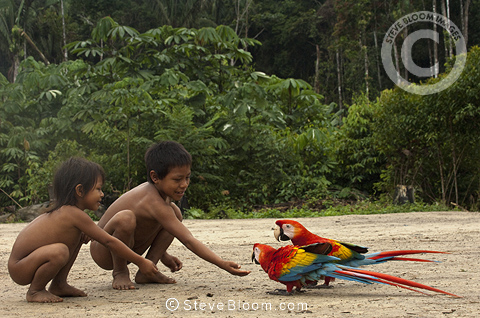 Huaorani Indian children playing with pet scarlet macaws (Ara macao). Gabaro Community, Yasuni National Park, Amazon rainforest, Ecuador, South America.