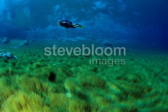 Scuba diver swimming over the lake bottom, nature reserve, Cornino Lake, Friuli, Italy
