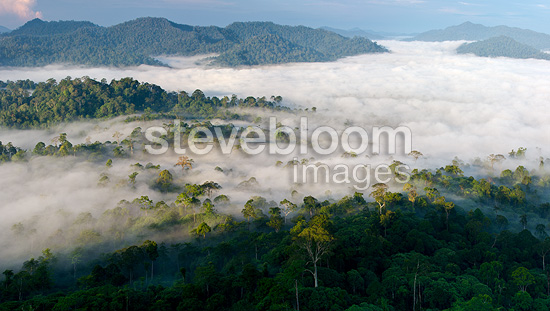 Mist hanging over Lowland Dipterocarp Rainforest just after sunrise. Danum Valley Conservation Area, Sabah, Borneo.