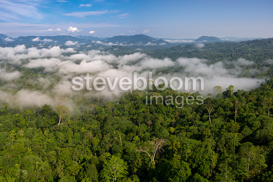 Low cloud hanging over lowland Dipterocarp rainforest. Danum Valley, Sabah, Borneo.