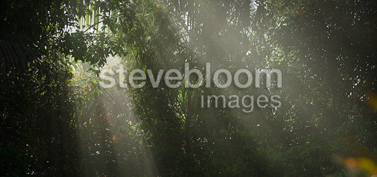 Shafts of sunlight pierce a veil of foliage. Lowland Dipterocarp rainforest, Maliau Basin - Sabah's 'Lost World' - Borneo.