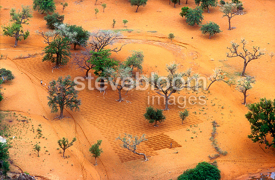 Subsistence farm using shade from trees, Dogon country, Mali