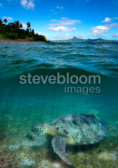 Green sea turtle in front of Mount Choungui Mayotte