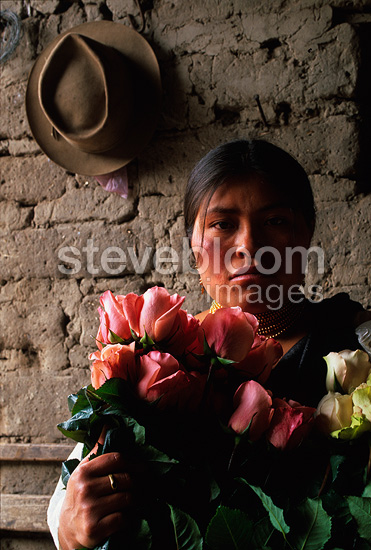 Woman picking roses for a bouquet Ecuador