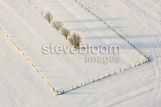 Alignment of trees in a field covered with snow in the Moselle, France