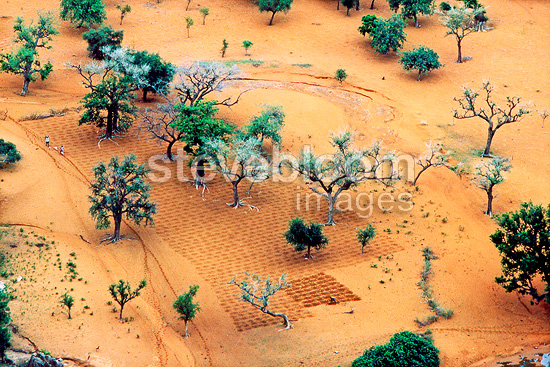 Fields in Dogon country in the south of Mali