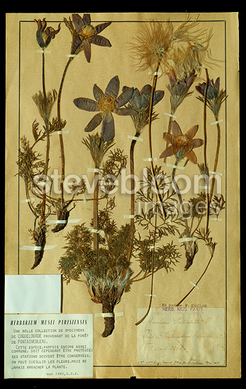 Herbarium collection of the National Natural History Museum (MNHN), Paris