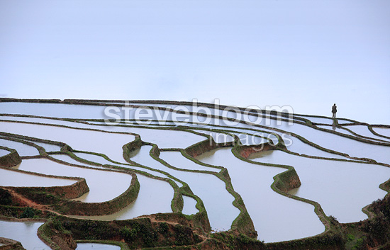 Rice plantations of mountain in terrace in the fog Yunnan China