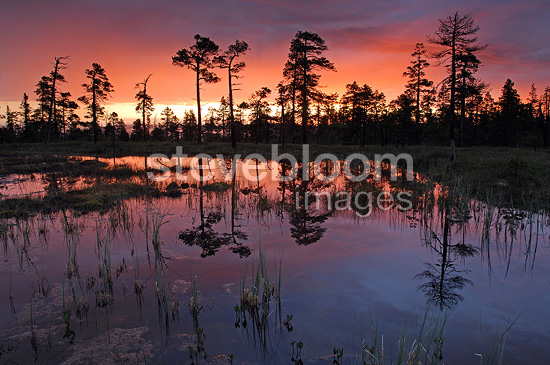 Reflections in a peat bog at sunrise Sweden