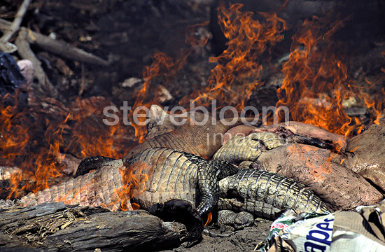Corpses of poached animals burning in a garbage