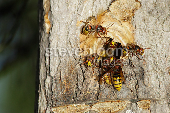 Signs of wasp nests  Ehrlich Pest Control  Your Local