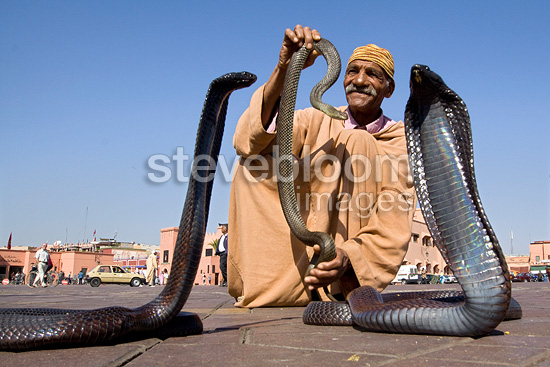 Snake charmer with four Egyptian Cobras Marrakech