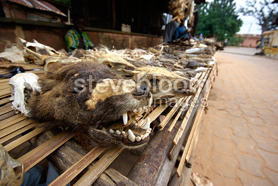 Sale items for voodoo rituals in Benin