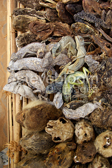 Sale items for voodoo rituals market Benin
