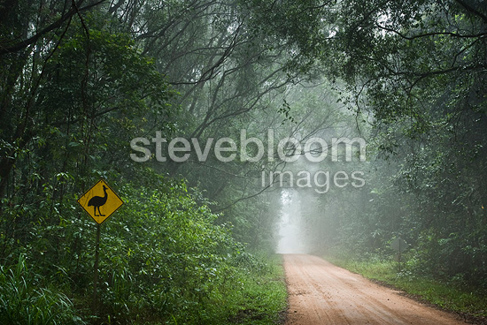 Road across the tropical rainforest of Queensland