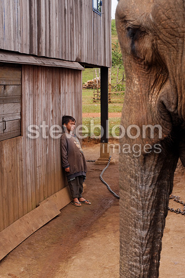 Child and Elephant in a village in Mondol Kiri Cambodia (Asian elephant)