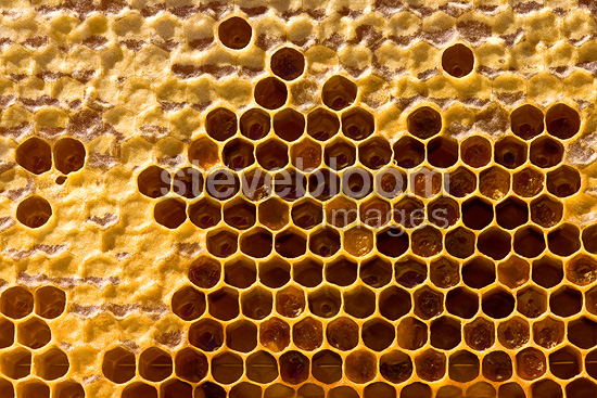 Honeycombs of a beehive partially filled with honey France