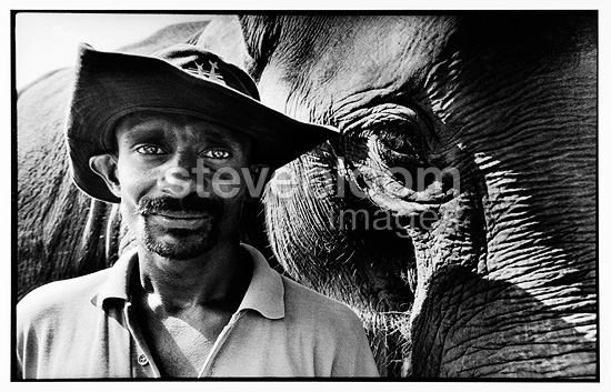 Portrait of an elephant near his mahout Sri Lanka (Asian elephant)