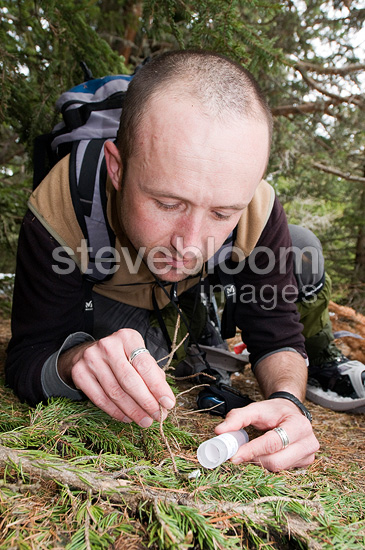 Scientist collecting faeces from a Gelinotte (bird), France