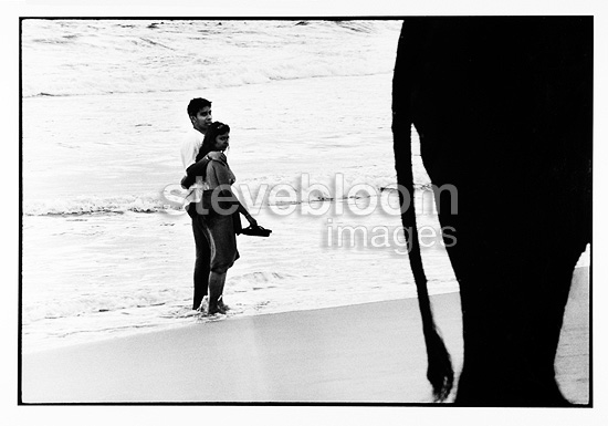 Loving couple looking at an elephant on a beach Sri Lanka (Asian elephant)