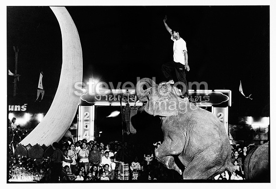 Demonstrate and Acrobatics Festival Surin Thailand (Asian elephant)