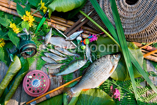 River fishes and fishing equipment Alsace France