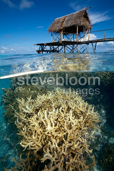 Coral beneath the surface of water near a pontoon  Tuamotu