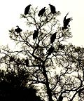Vultures silhouetted against the sky, South Africa